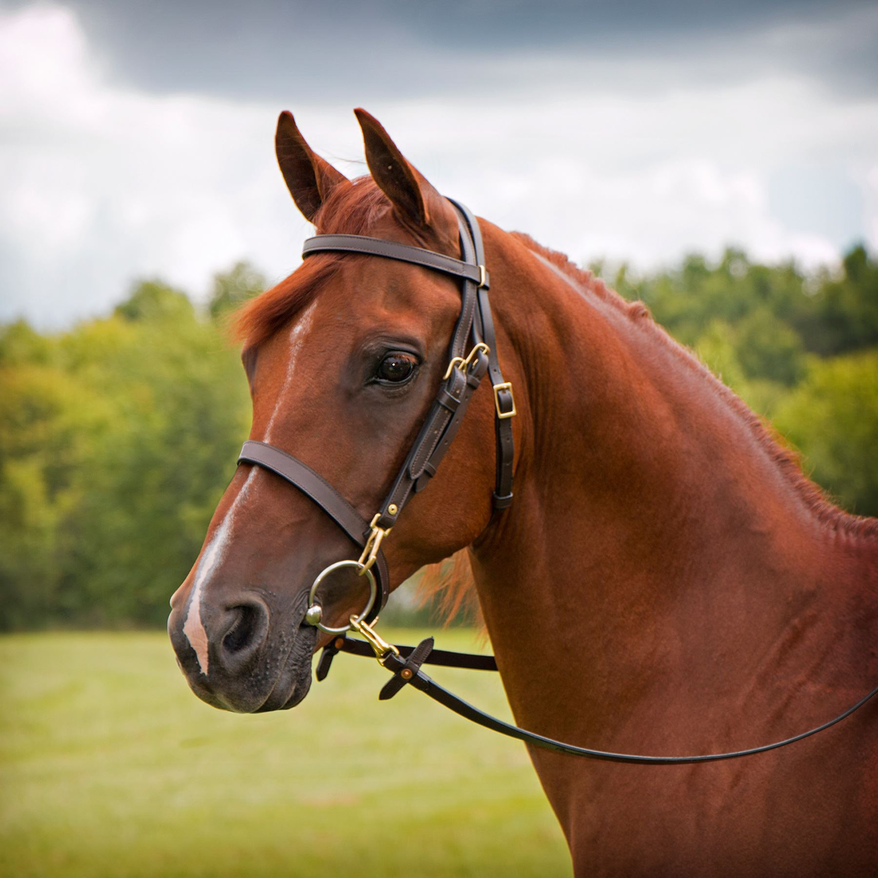 premier arabian training bridle double adjustment in