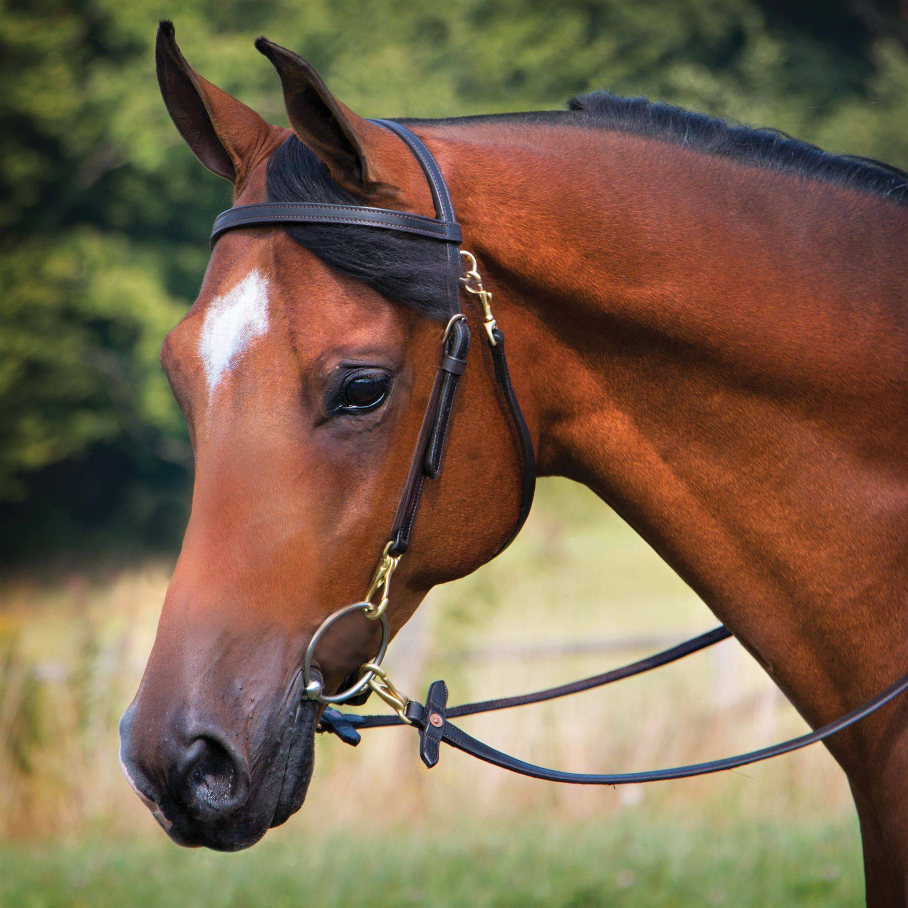 premier arabian training bridle in browband bridles at