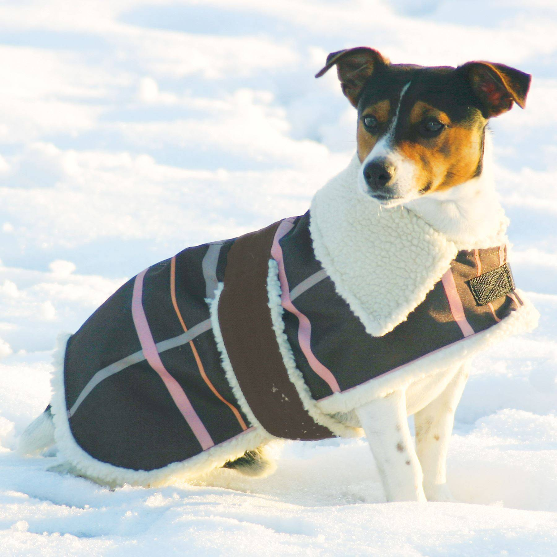 Heve You Clothes for Small Dogs Winter Warm Large Dog Clothing Waterproof Dog Coat Jacket Pet