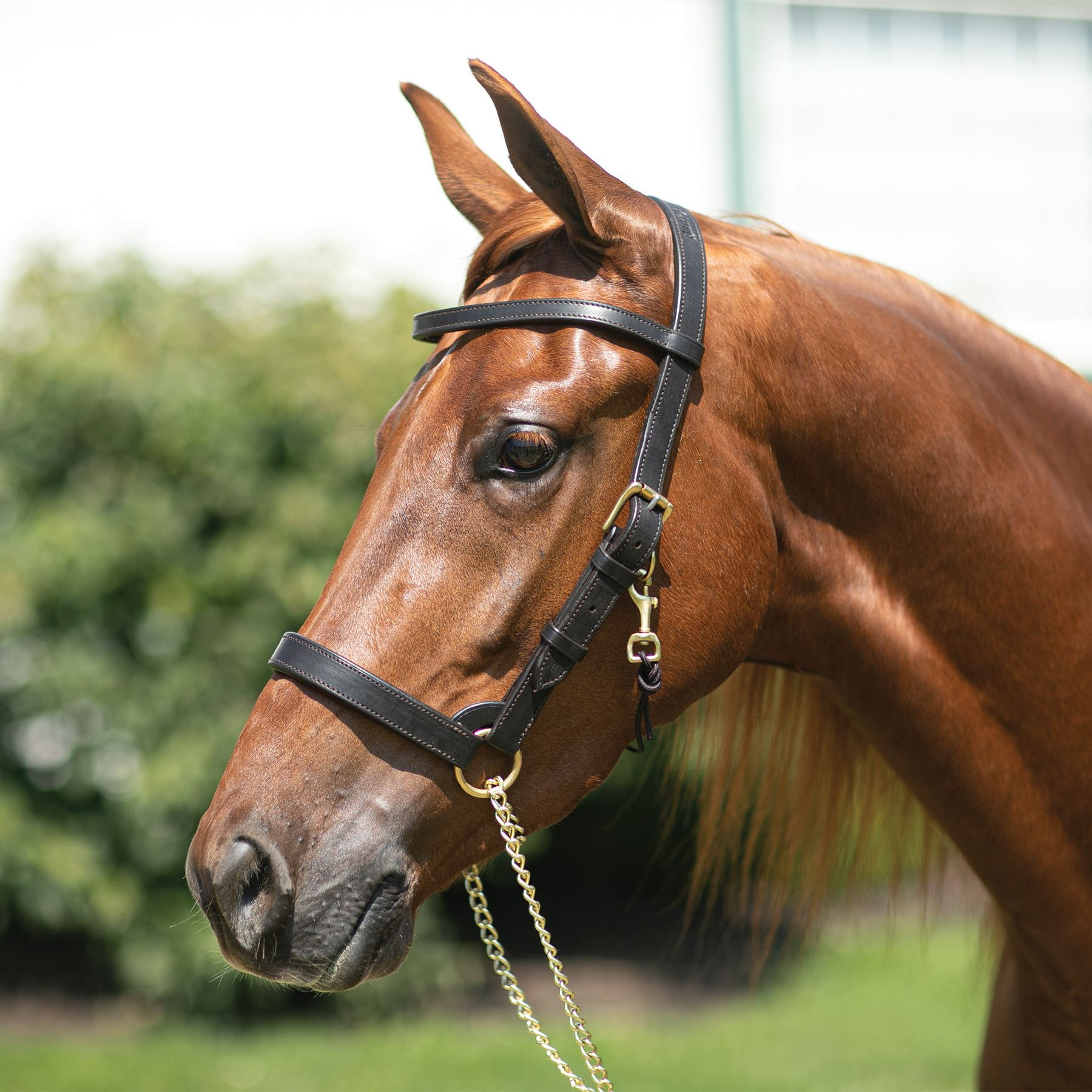 Billy Royal® Pro Training Halter
