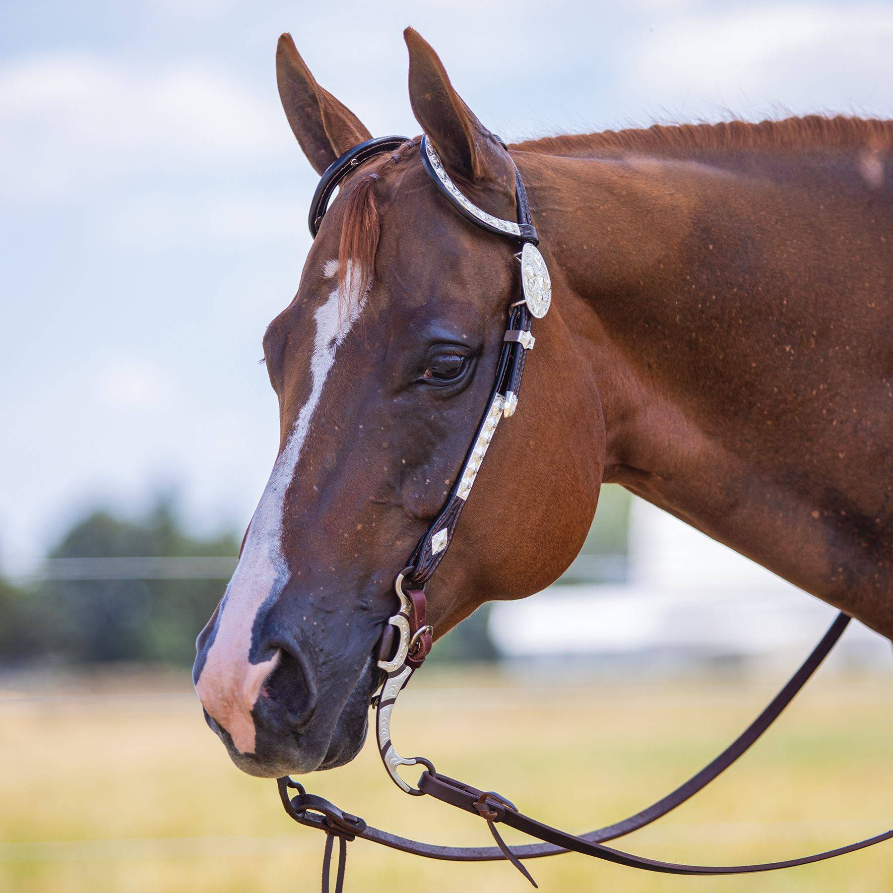 Billy Royal® Double Diamond Two Ear Headstall