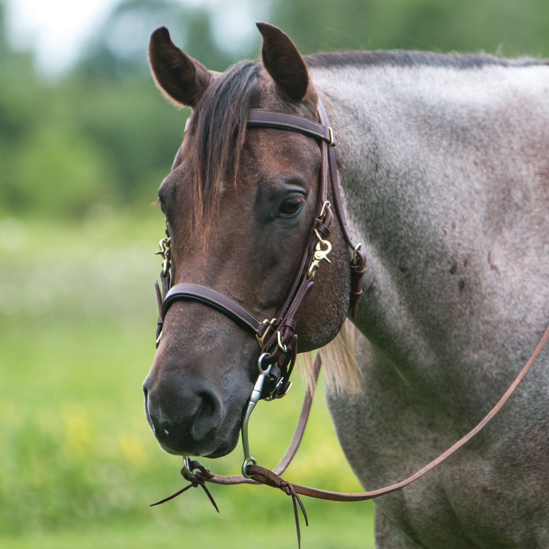 Billy Royal® Deluxe Trail Halter Bridle Combo
