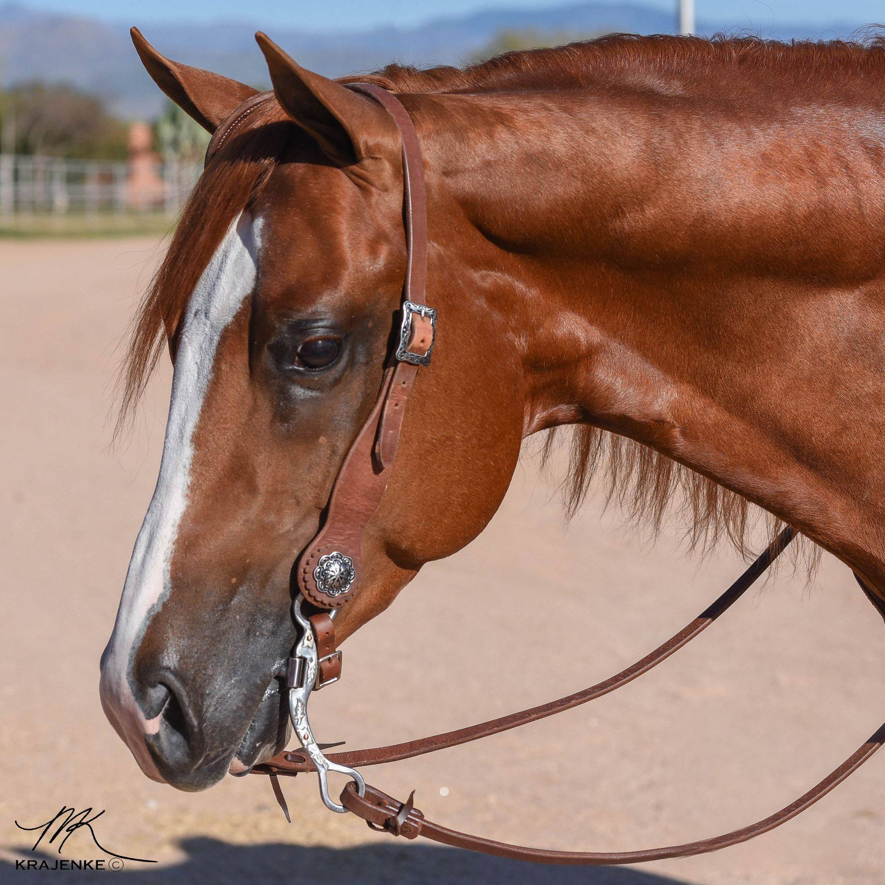 Billy Royal® Oiled Hermann Oak Leather One Ear Headstall with Teardrop Cheeks