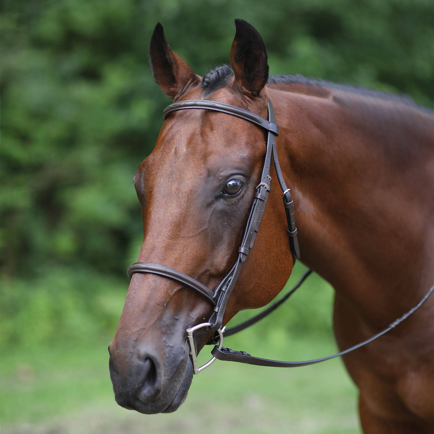 Premier Raised Fancy Stitched Bridle