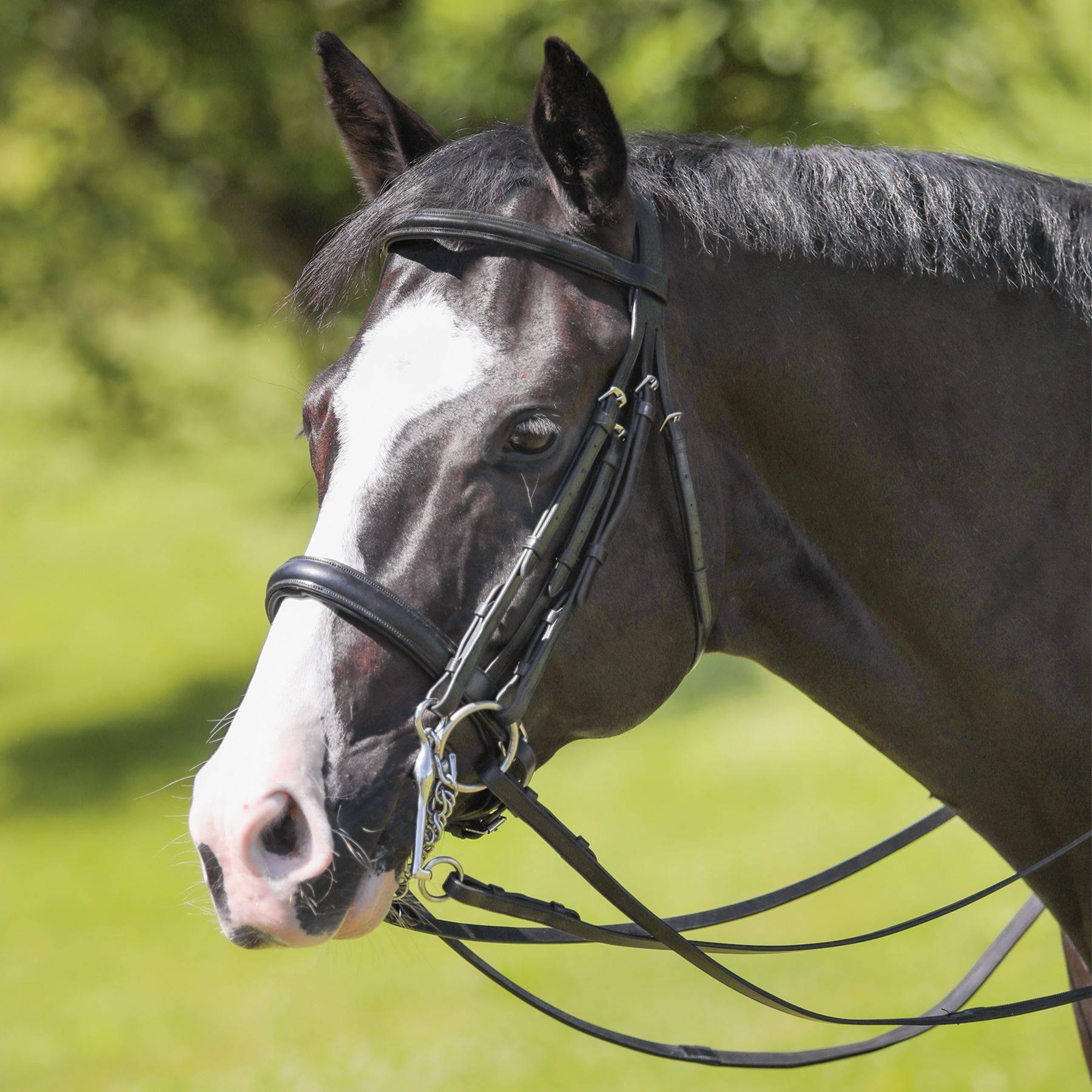 Joseph Sterling® Conversion Dressage Bridle
