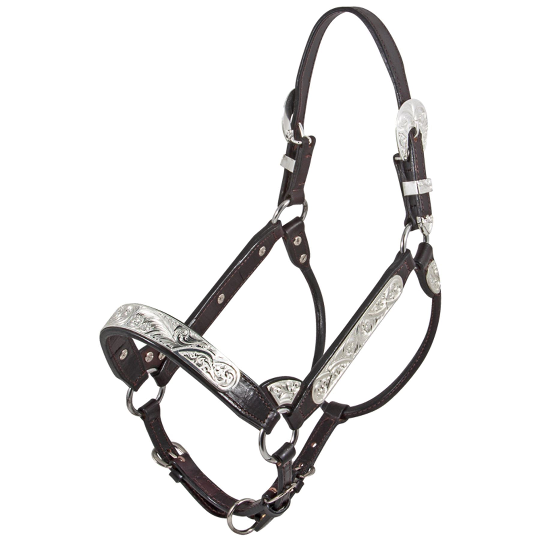 Billy Royal Riverside Rebel Show Halter In Western At Schneider