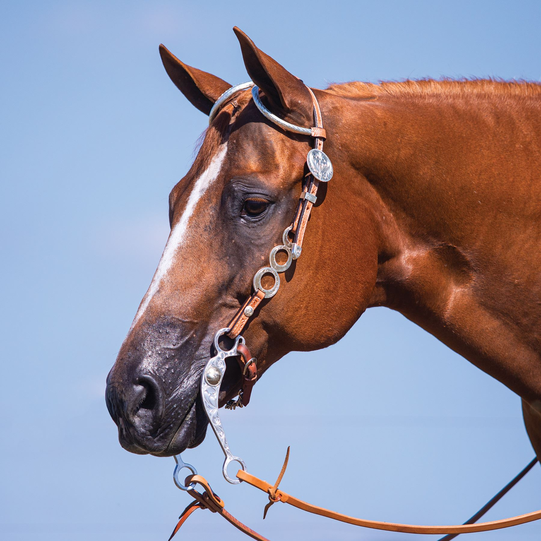 Billy Royal® Hampton SP Triple O Headstall