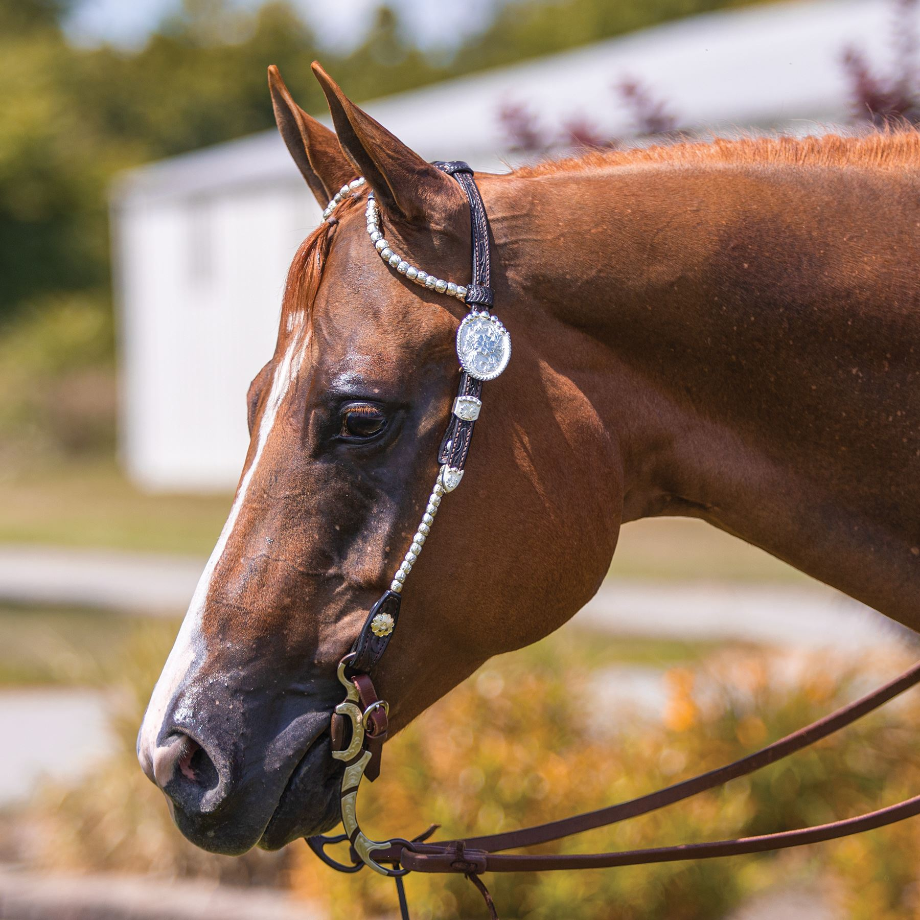 Billy Royal® Bainbridge Classic Two Ear Headstall