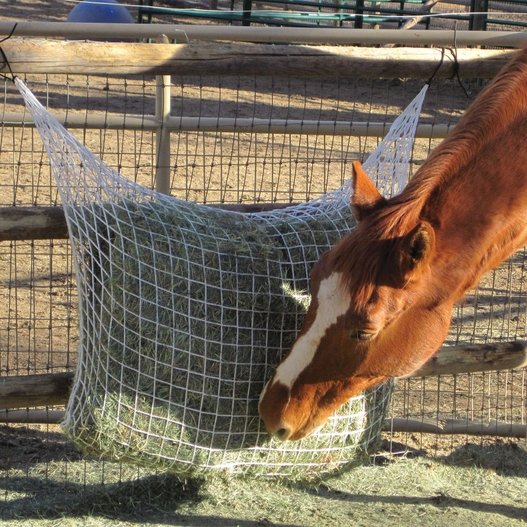 ca14a4f43c6c Kensington Freedom Feeder® Extended Day Hay Net in Stable at ...