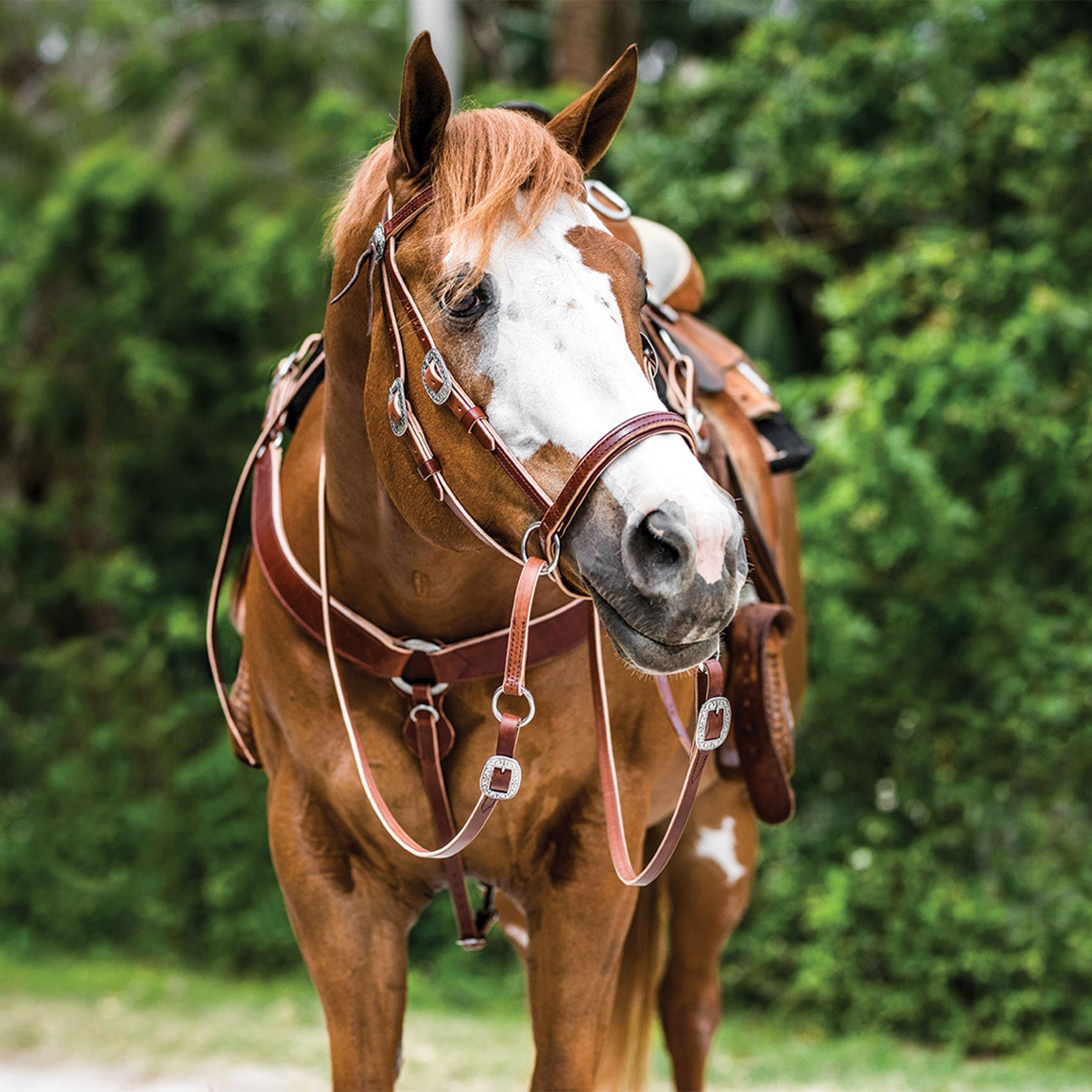 Dr. Cook® Bitless Deluxe Harness Leather Western Headstall