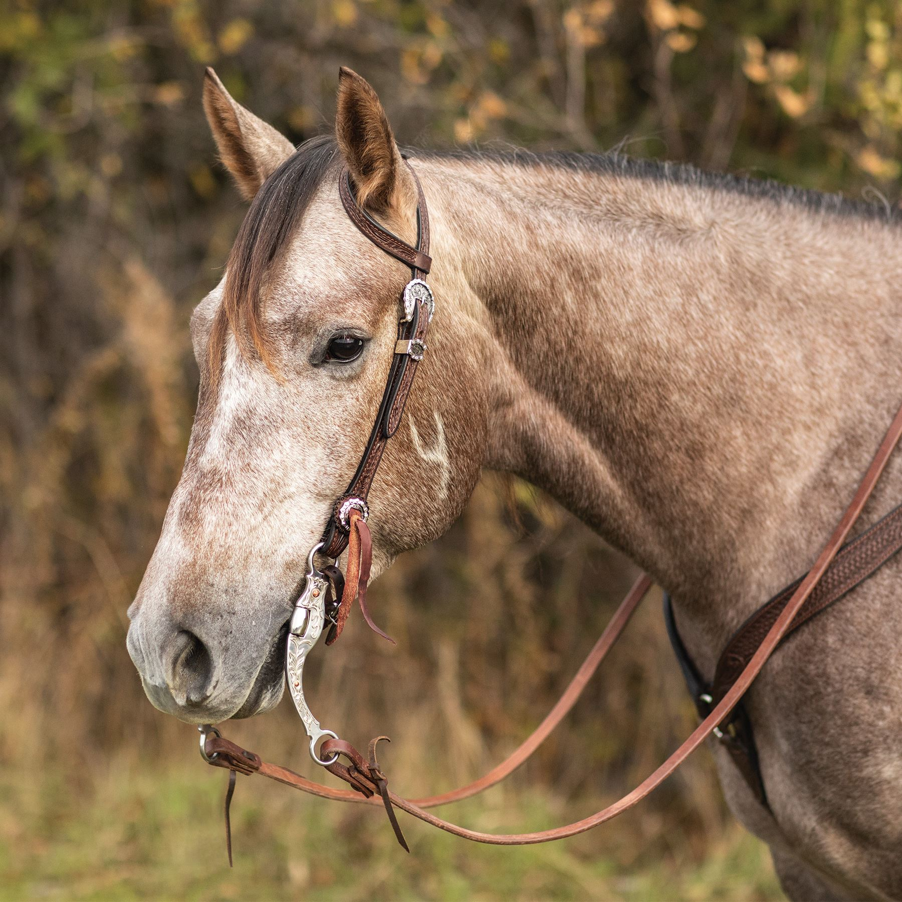 Billy Royal® Grizzly Ranch Leather Two Ear Headstall