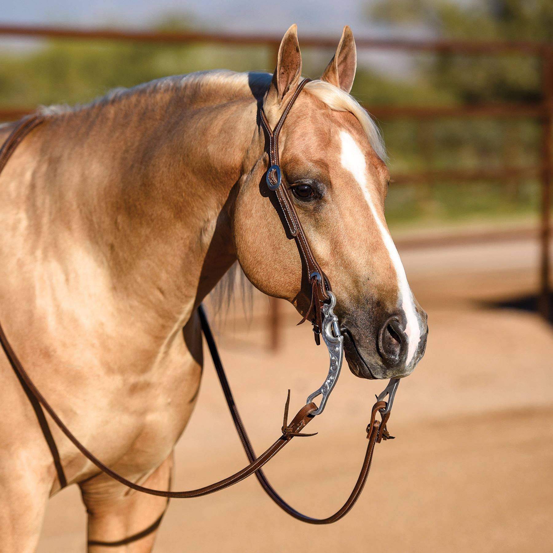 Billy Royal® Latigo Lined Oiled Hermann Oak Leather Split Ear Headstall