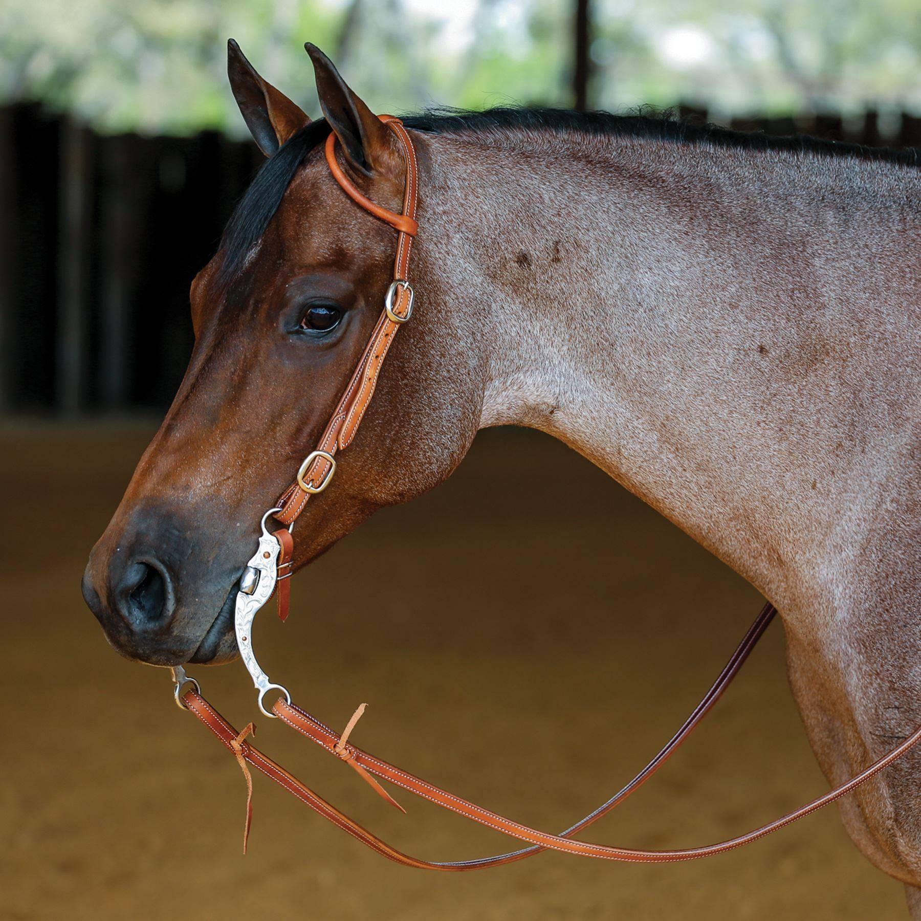 Double S Latigo Lined Rolled One Ear Headstall with Buckles