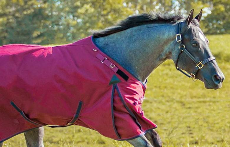 Waterproof Horse Turnout Blankets and Sheets for Winter