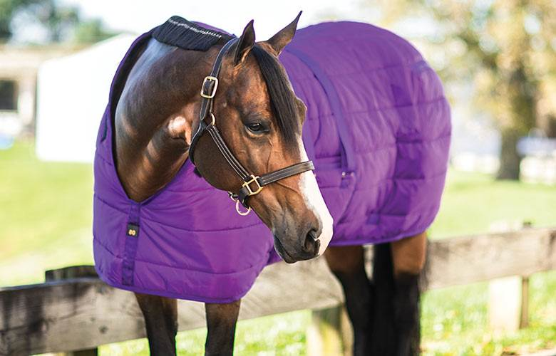 Horse Stable Blankets & Sheets - Schneiders