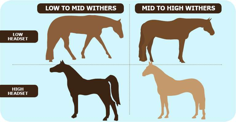 Is Your Horse's Head Carriage High or Low?
