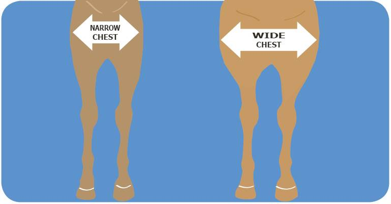 Is Your Horse Wide or Narrow chested?