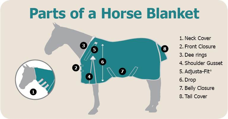 Definitions of all the different parts of a standard horse blanket