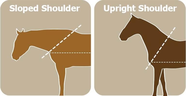 Is Your Horse's Shoulder Sloped or Upright?