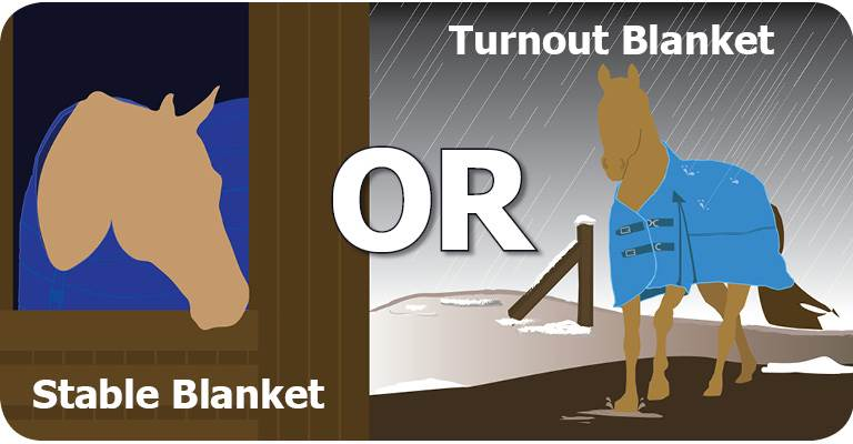 Stable Blankets vs Turnout Blankets
