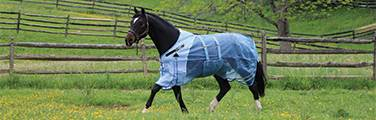 Why use a fly sheet? - Learn why people use fly sheets on their horses.