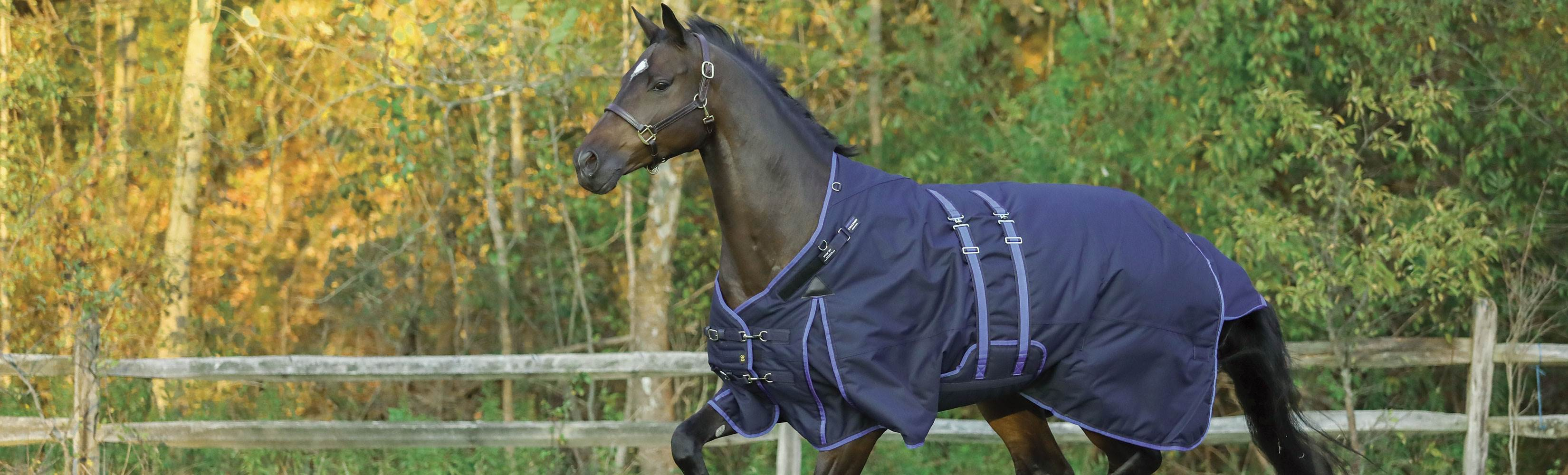 Blanketing 101 - Simple steps to get the best blanket for your horse