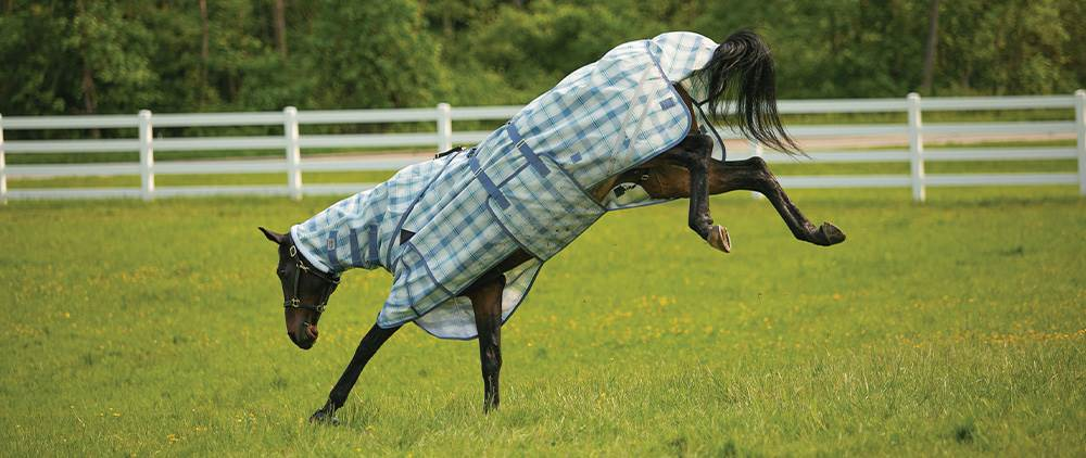 Can My Horse Wear a Fly Sheet in the Summer - The Agitated Horse