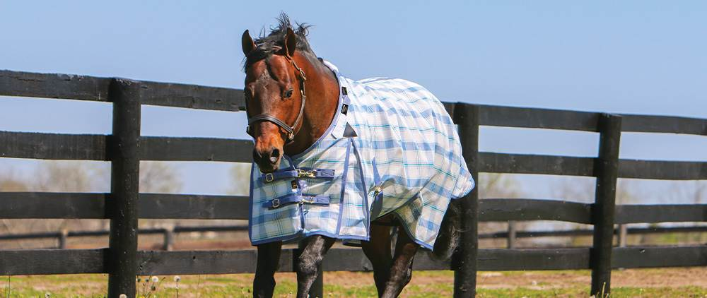 Can My Horse Wear a Fly Sheet in the Summer - Dura-Mesh