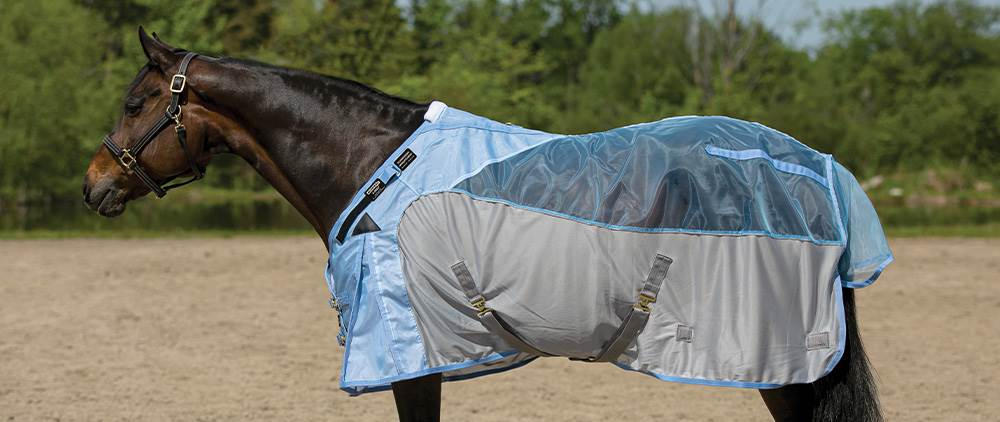 Can My Horse Wear a Fly Sheet in the Summer - Horses' with Dark Coats