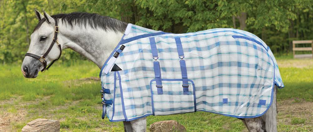 Can My Horse Wear a Fly Sheet in the Summer - Horses' with Light Coats