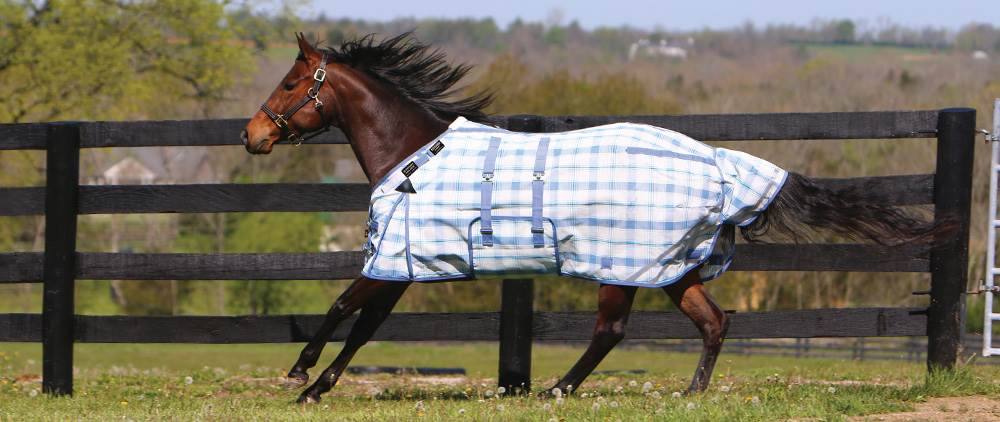 Can My Horse Wear a Fly Sheet in the Summer - hot Weather