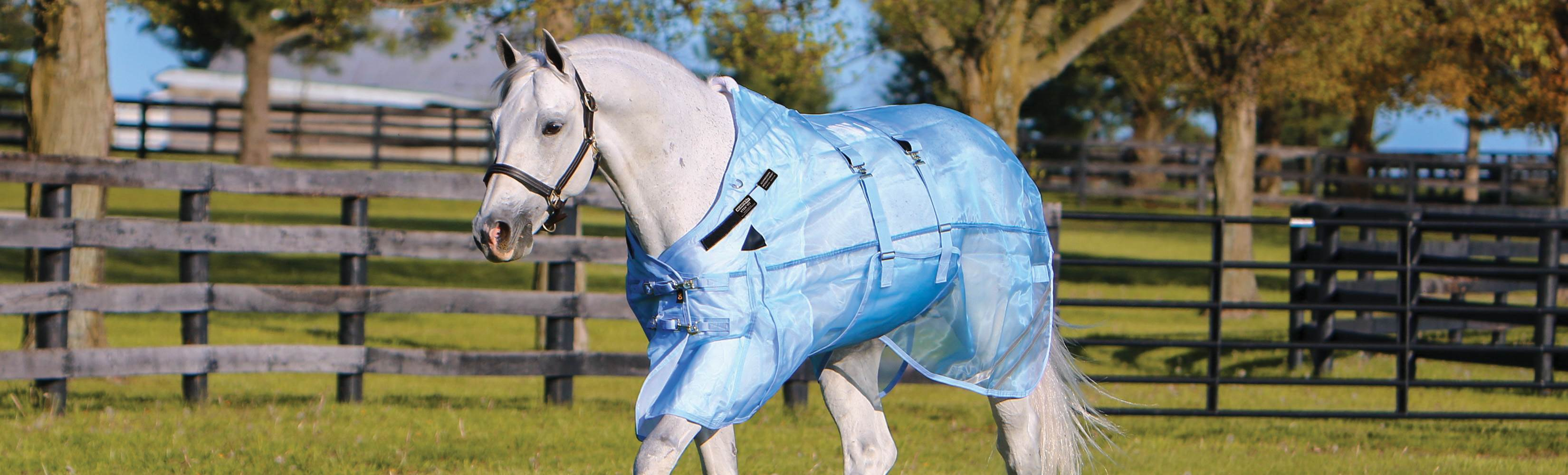 Can My Horse Wear a Fly Sheet in the Summer - How Hot is Too Hot for a Fly Sheet?