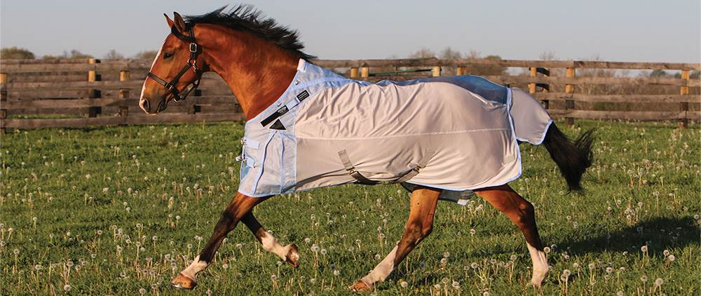Can My Horse Wear a Fly Sheet in the Summer - Hybrid