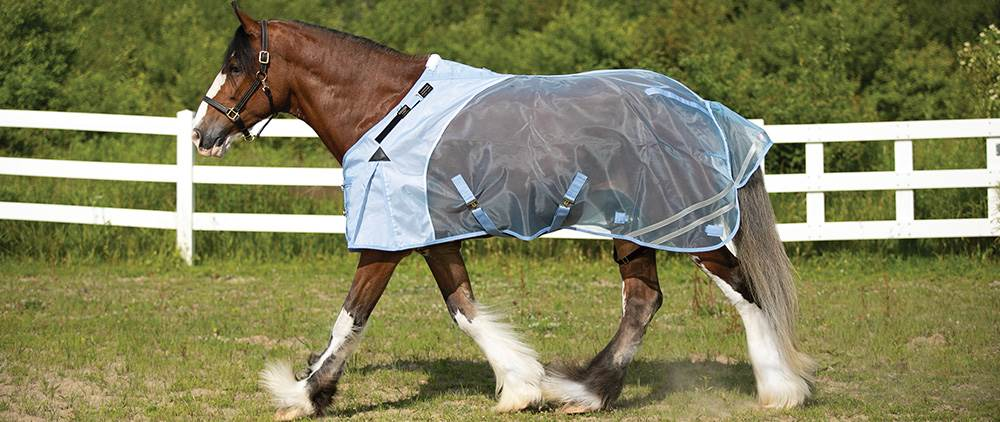 Can My Horse Wear a Fly Sheet in the Summer - Mosquito Mesh