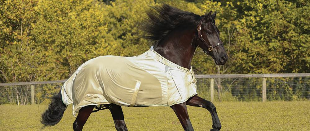 Can My Horse Wear a Fly Sheet in the Summer - NaturalShield Sheet