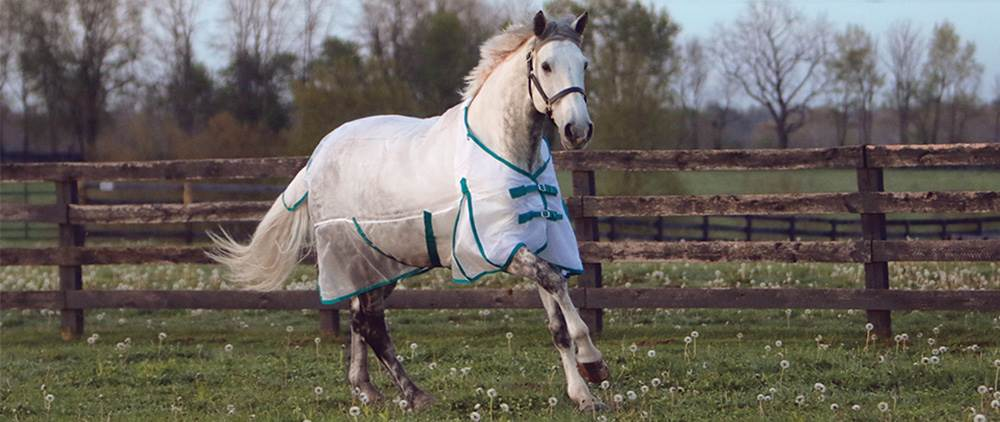 Can My Horse Wear a Fly Sheet in the Summer - Ripstop Nylon Mesh