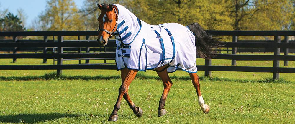 Can My Horse Wear a Fly Sheet in the Summer - Soft Interlocking Mesh