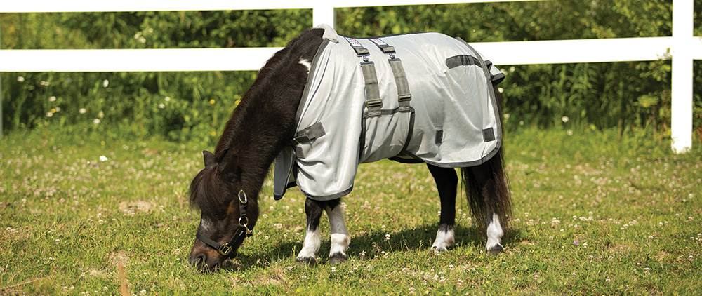 Can My Horse Wear a Fly Sheet in the Summer - The Unphased Horse