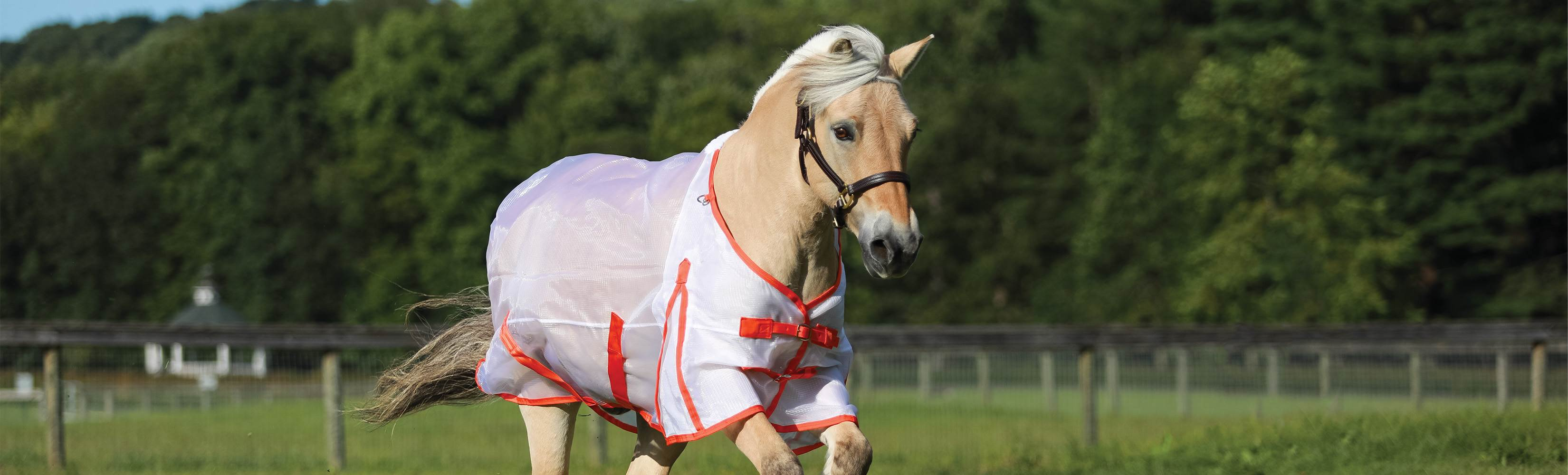 Can My Horse Wear a Fly Sheet in the Summer - What is the Coolest Fly sheet for Horses in the Summer?