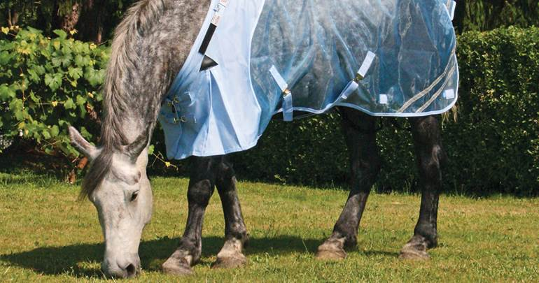 Draft Horse Fly Sheets & Accessories