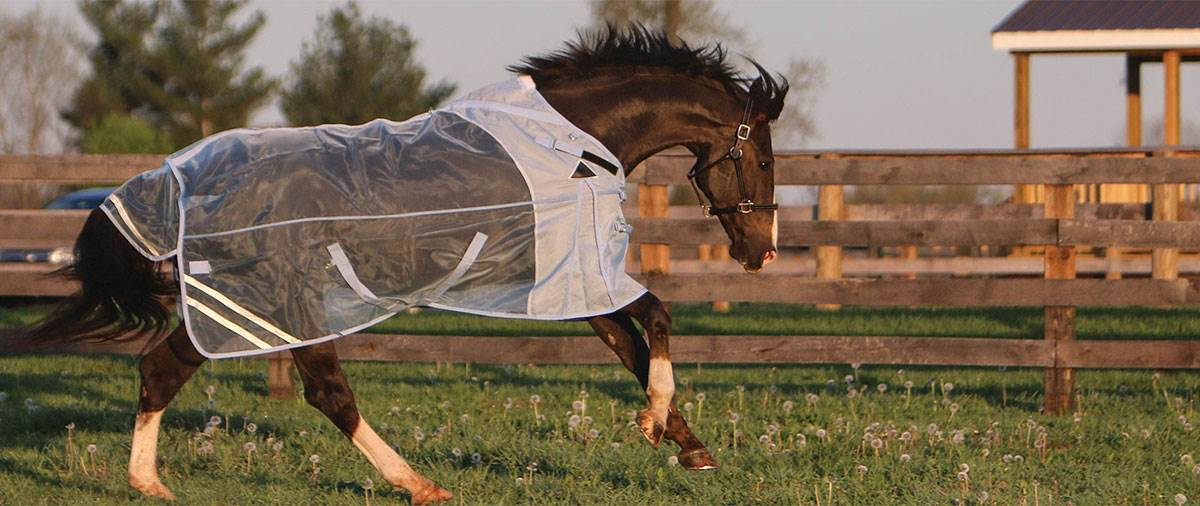 Fly Sheet 101 - Simple steps to get the best fly sheet for your horse