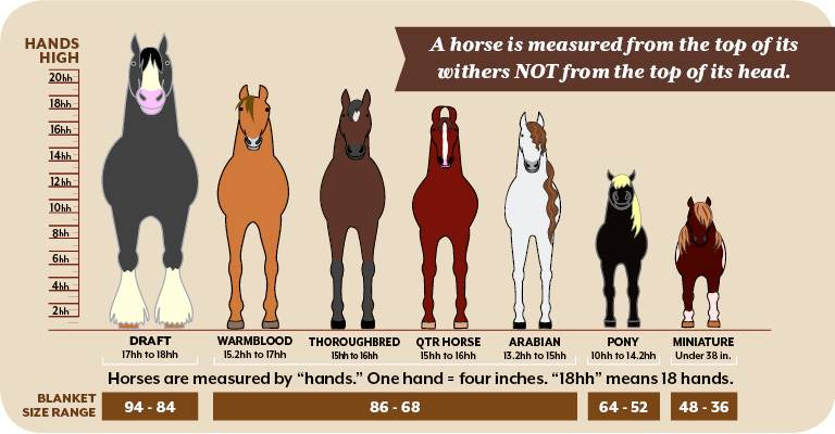 Is Your Equine Friend a Mini, Pony, Horse or Draft?