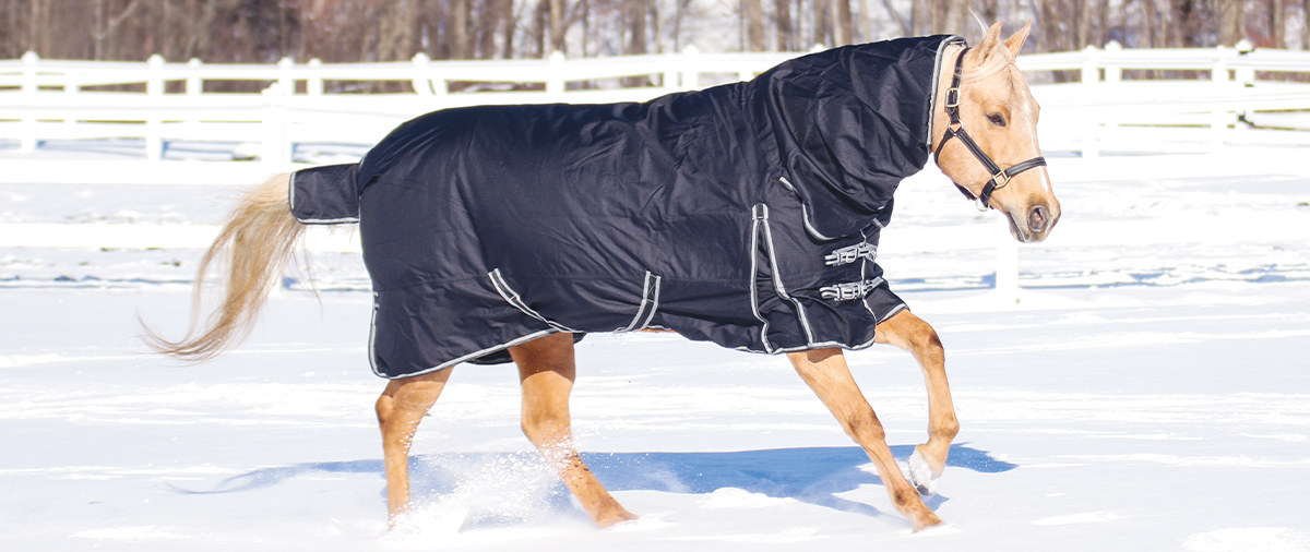 Top 10 Horse Blankets for Winter