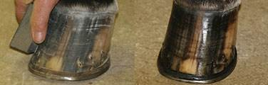 Ultra Hoof Polishes & Enhancers - Repels Dust & Dirt