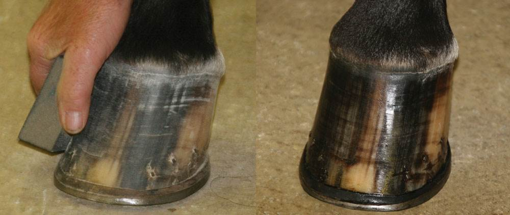Ultra Hoof Polish Enhancer
