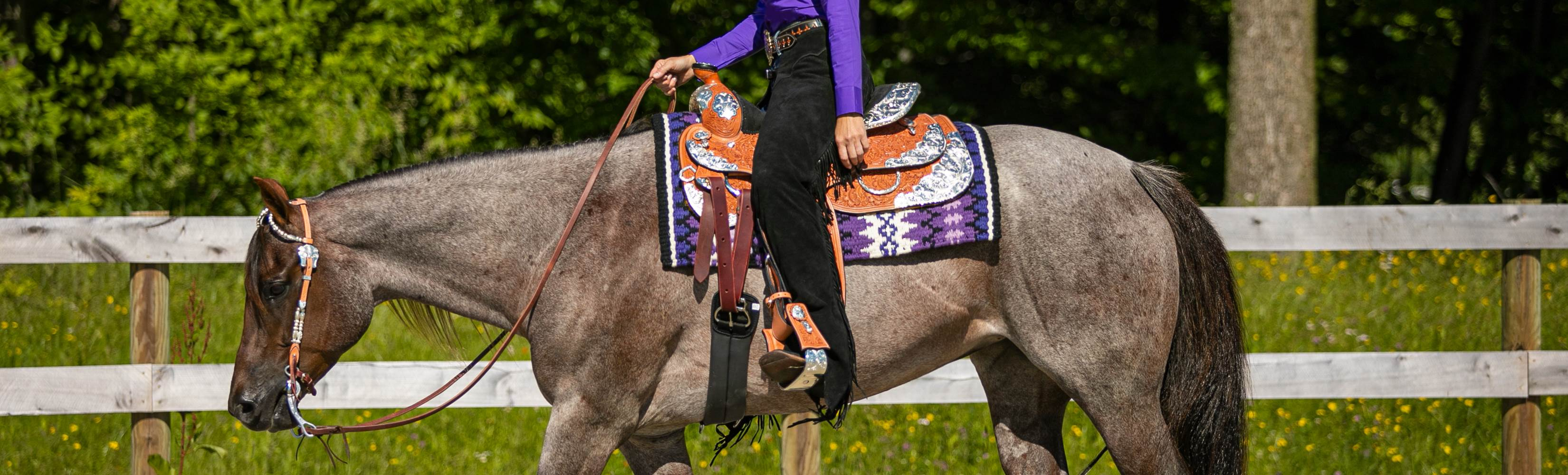Are You Looking for a Work or Show Western Saddle?