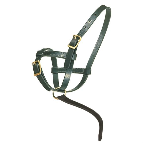 Premier Leather Foal Halter - Newborn