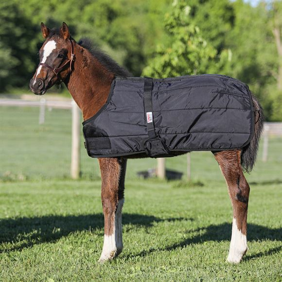Dura-Nylon® Expandable Foal Stable Blanket