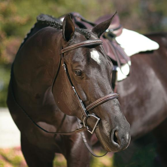 Pinnacle Padded Fancy Stitched Bridle