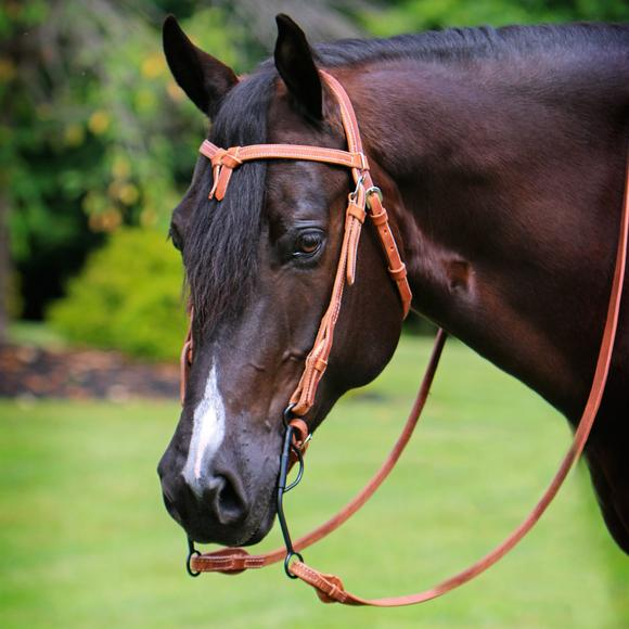 Billy Royal® Harness Leather Quick Change Bridle